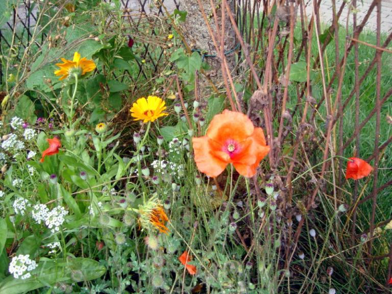 6 sept 2018 - notre jardin