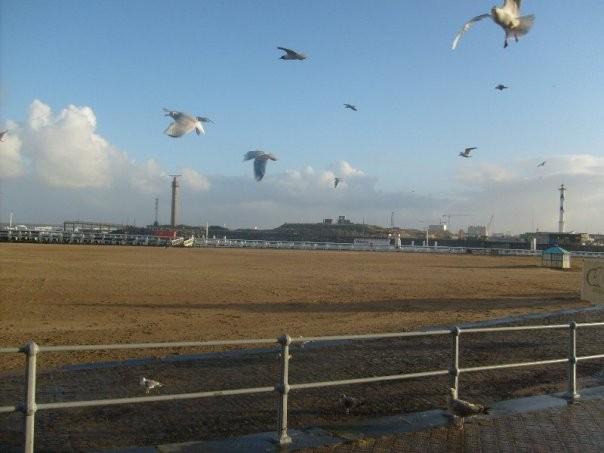 23 novembre 2008 à Ostende