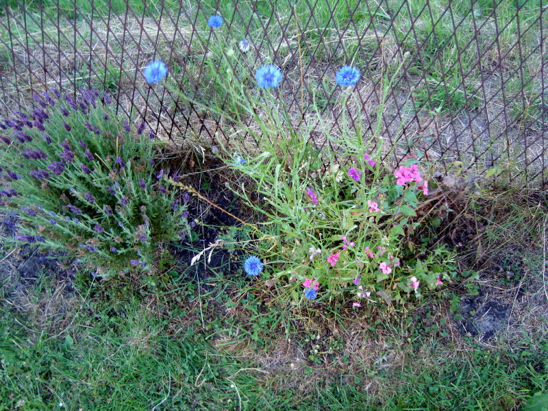bosquet floral