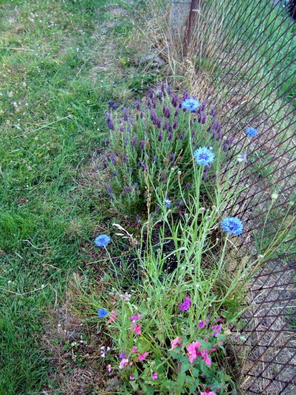 lavande et bosquet floral