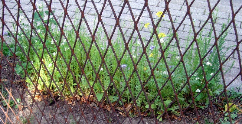 Le tapis floral du bas du talus citoyen
