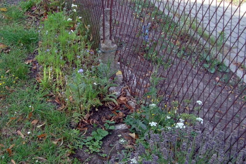 le tapis floral du haut du talus