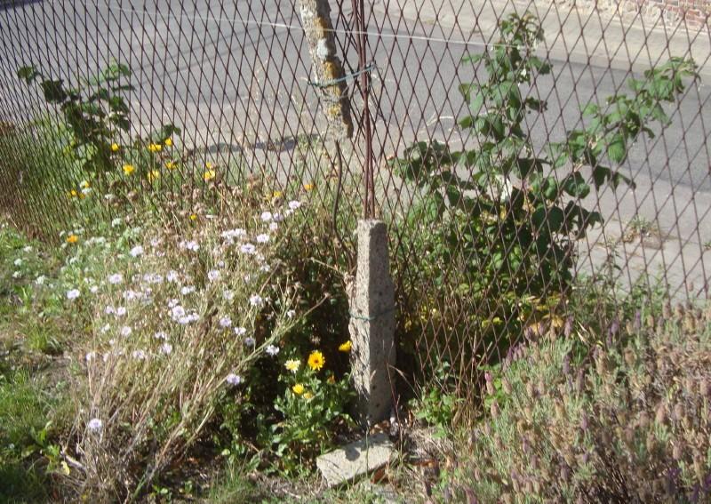 Si vous connaissez le nom de ces fleurs grises, mettez le en commentaire !