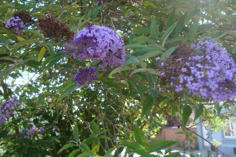 ... mon arbre à papillons !