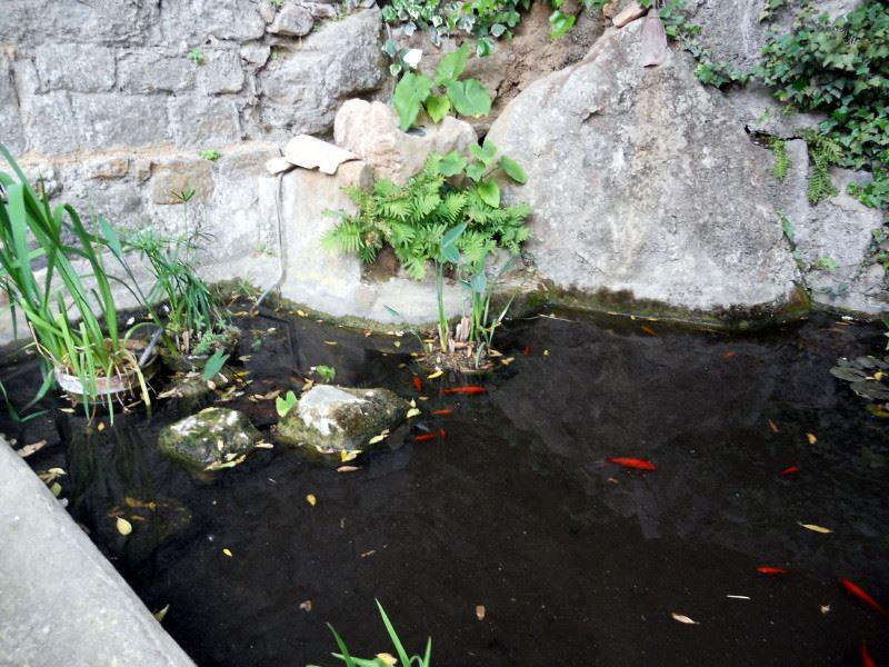 Fondfroide étang et poissons rouges