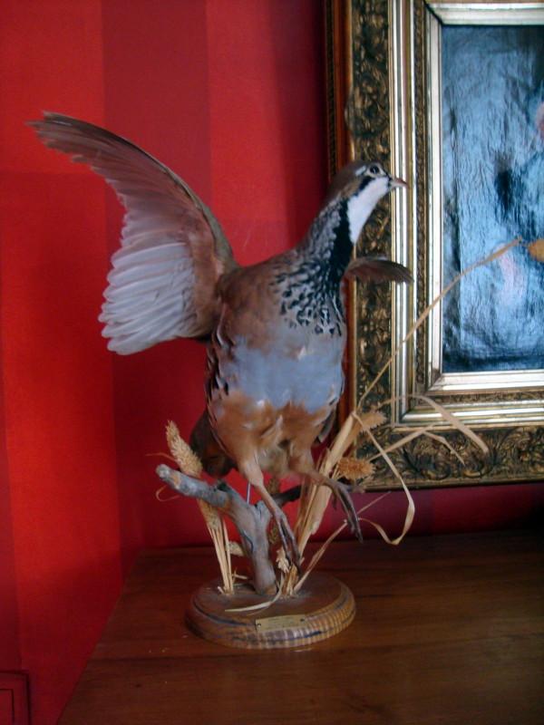 détail oiseau sur cheminée